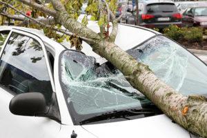 Что делать если на ваше авто упало дерево